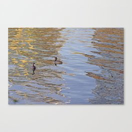 Ducks on LadyBird Lake in Color Canvas Print
