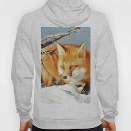 Algonquin Red Fox in the Snow Hoody