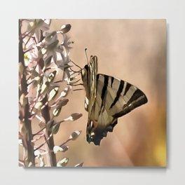 Scarce Swallowtail Feeding Metal Print