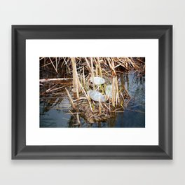 Three Painted Turtles in a Marsh Framed Art Print