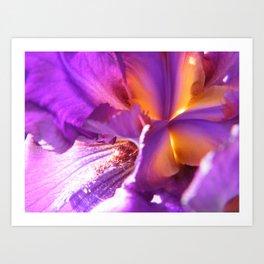 Iris Briliance Art Print