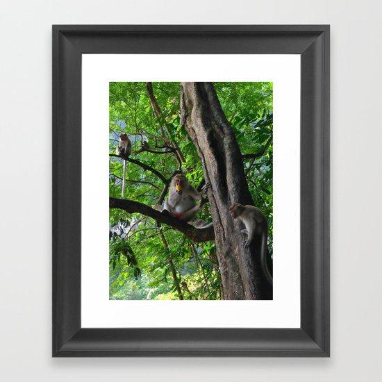 Mountain Monkeys Framed Art Print