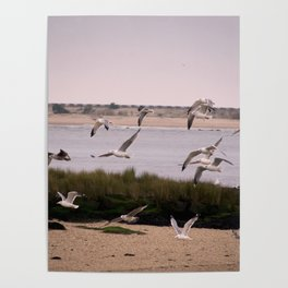 the seagulls dance Poster