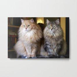 Mr. Cesare and Queen Cleopatra. Siberian cats Metal Print