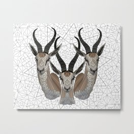 Springbok Metal Print
