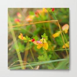Irish wildflowers birdsfoot trefoil Metal Print