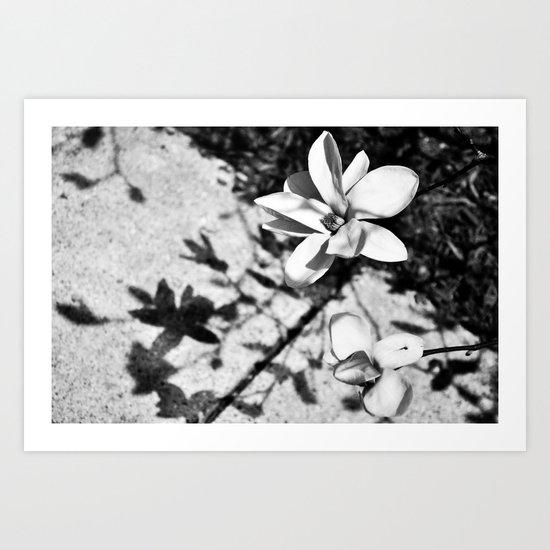 Blossum Art Print