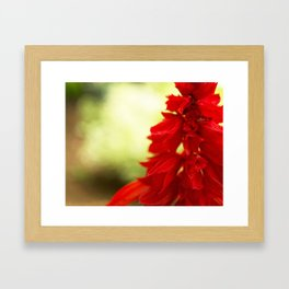 Red Floral Abstract Framed Art Print