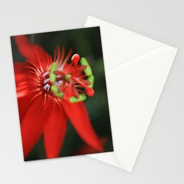 Passiflora vitifolia Scarlet Red Passion Flower Stationery Cards