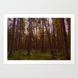 Fir forest in the morning sunlight Art Print