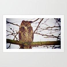 The Disgruntled Owl  (2012) Art Print