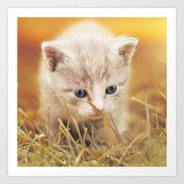 Kitten   Chaton Art Print