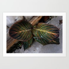 Moody Leaf Art Print