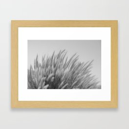 Foxtails on a Hill in Black and White Framed Art Print