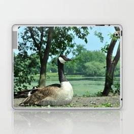Deluxe Ducks #16 Laptop & iPad Skin