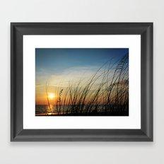 Sunset through the sea weeds Framed Art Print