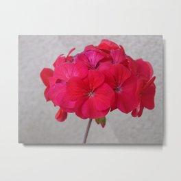 Red Geranium Against Adobe Wall Photograph Metal Print