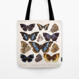 Vintage Scientific Insect Butterfly Moth Biological Hand Drawn Species Art Illustration Tote Bag