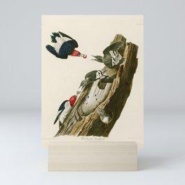 Red headed Woodpecker - John James Audubon's Birds of America Print Mini Art Print