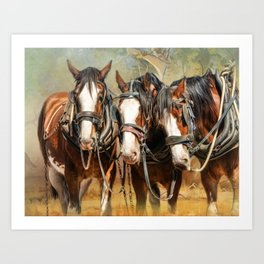 Clydesdale Conversation Art Print