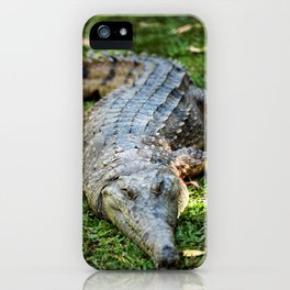 Freshwater crocodile iPhone Case