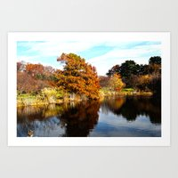 arnold Art Prints featuring Arnold Arboretum by Christopher Richards