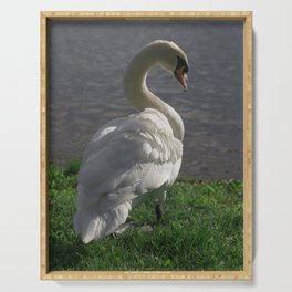 Beautiful White Swan in the Evening Sun Serving Tray