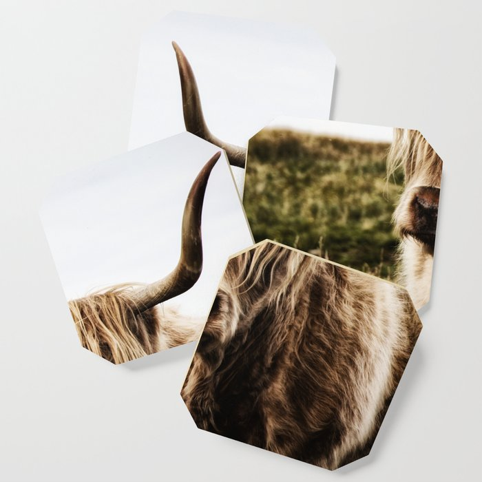 Highland Cow - color Coaster