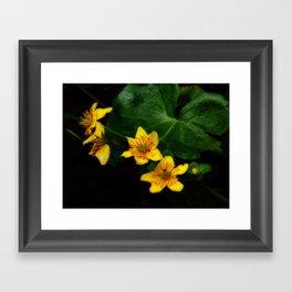 Marsh Marigold Framed Art Print