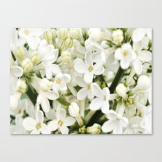Little Blossom Canvas Print