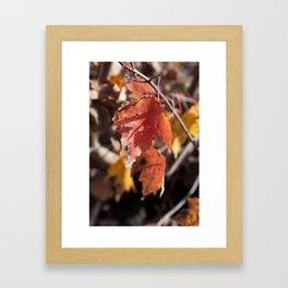 Fall in Manchester, NH Framed Art Print