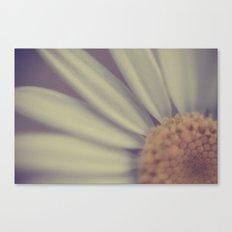 A Flirtatious Daisy Canvas Print