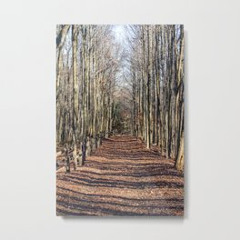 Follow me down... When the leaves come falling down... Metal Print