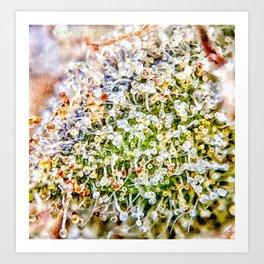 Constellation Top Shelf Bud Diamond OG Strain Trichomes Close Up View Art Print