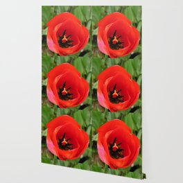 One Red Tulip Wallpaper