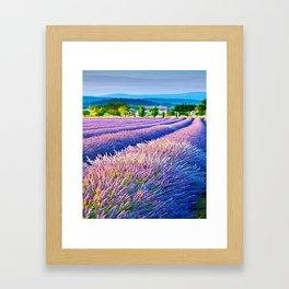 LAVENDAR FIELD1 Framed Art Print