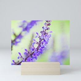 Salvia Flowers 6 Mini Art Print