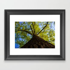 Upward to the canopy Framed Art Print
