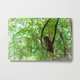 Forest Bathing  Metal Print
