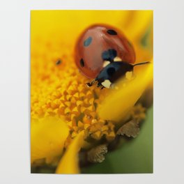 Ladybird, macro photography, still life, fine art, nature photo, romantic wall print Poster