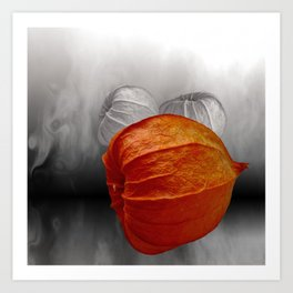physalis - colorkey Art Print