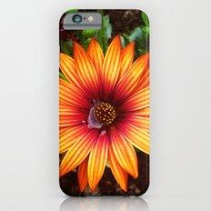 The Flower Sun Slim Case iPhone 6s