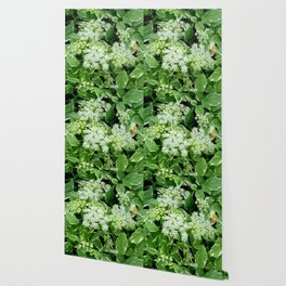 AWESOME DELICATE GREEN LACE FLOWERS Wallpaper