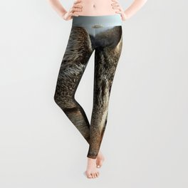 Stunning Tabby Cat Close Up Portrait Leggings
