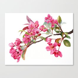 Pink Plum Blossoms with white background Canvas Print