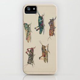 American Grasshoppers iPhone Case