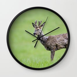 ROE DEER BUCK Wall Clock