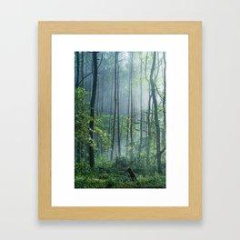 Enchanted Woodland Framed Art Print