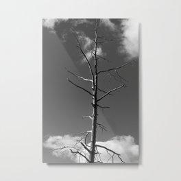 Dead Tree against the Sky Metal Print