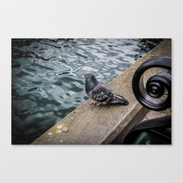 Pigeon at the Habour Canvas Print